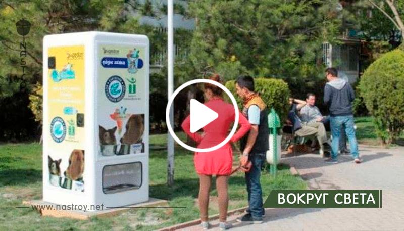 Вендинговые автоматы на улицах Стамбула кормят бездомных животных