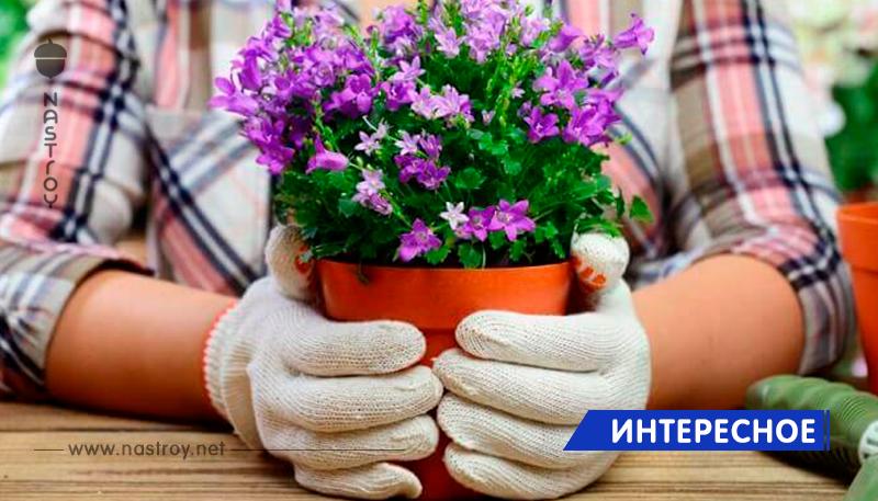 7 растений, которые могут серьезно навредить вашему здоровью