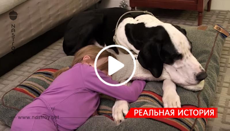 Трогательная история о том, как собака помогла девочке ходить