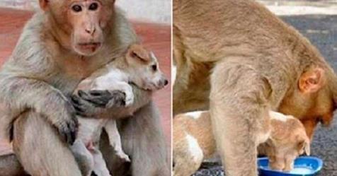 Обезьяна «усыновила» бездомного щенка. Она очень заботливая мама