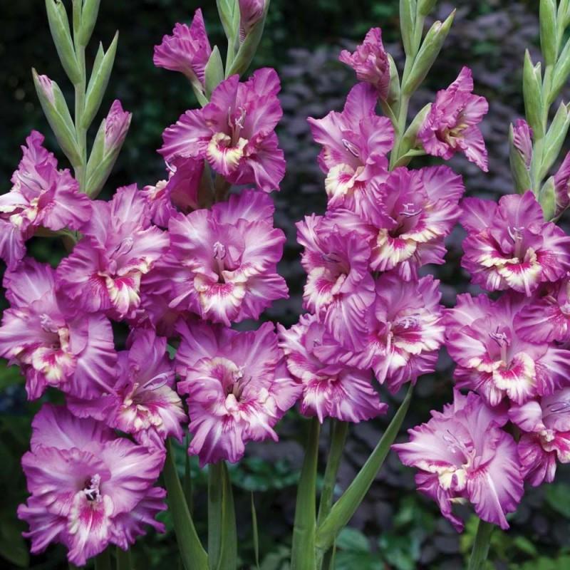 Вувузела - что это: описание дудки и цветов