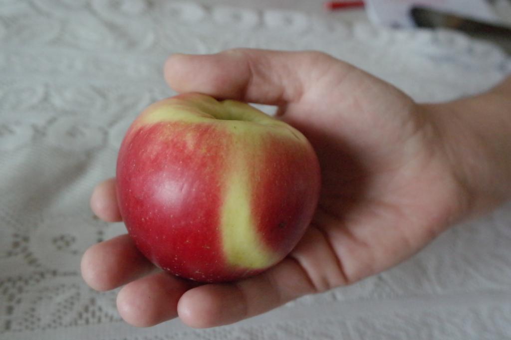 Загадки про яблоко гадаем, в яблочко ответом попадаем!