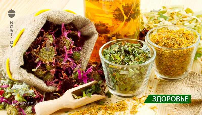 Эти самые мощные травы обновляют клетки печени и восстанавливают все её функции!