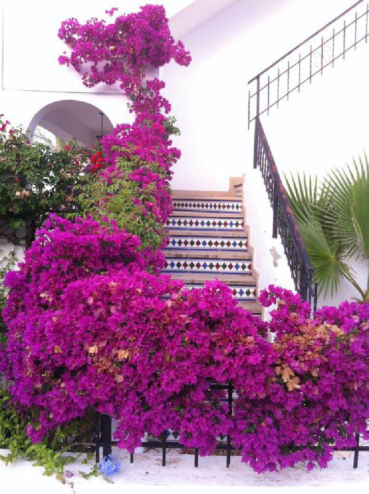 Cамые красивые и великолепные дома, утопающие в цветах.