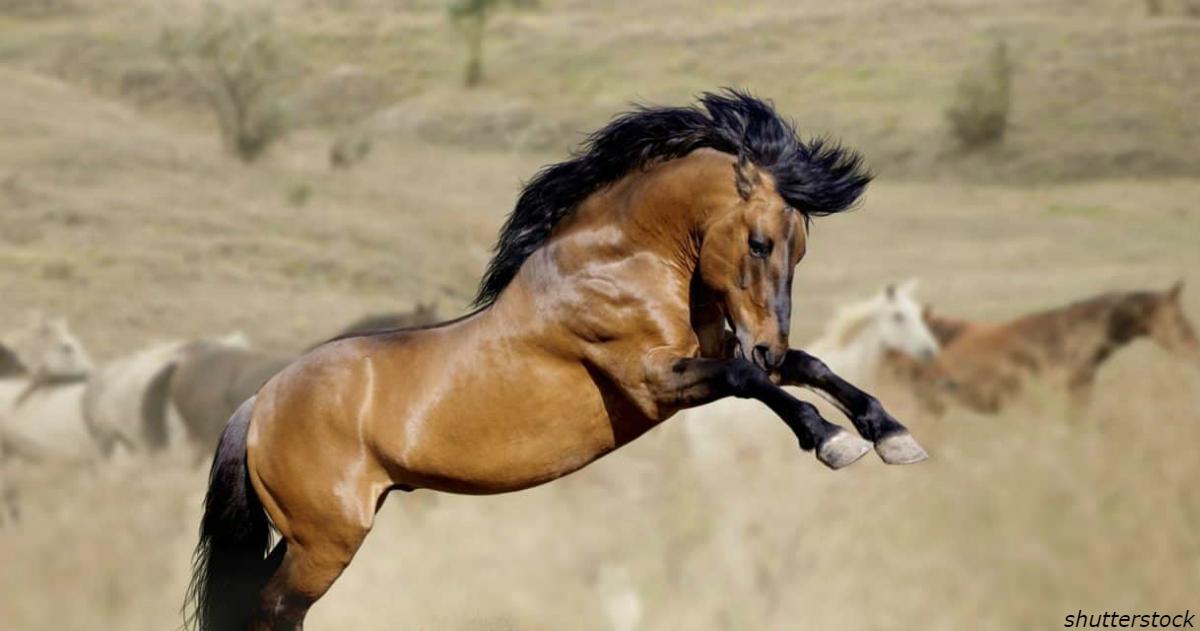 В США вам готовы платить 00 за ″усыновление″ дикой лошади