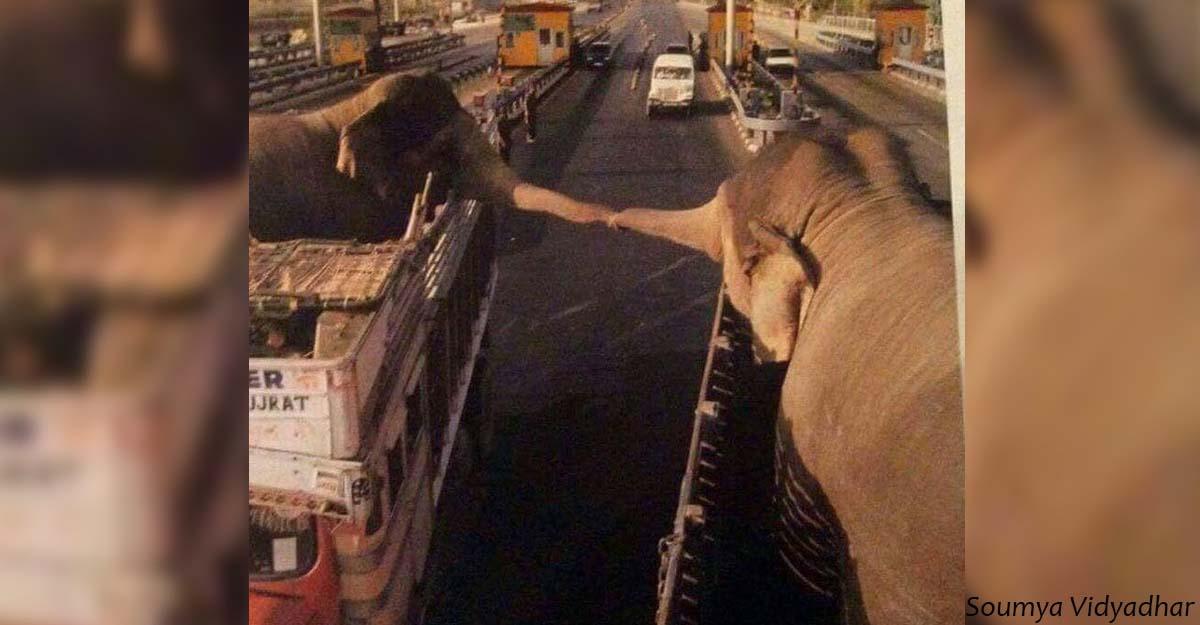 Двое слонов прощаются навсегда. Фото, которые раскрывают глаза
