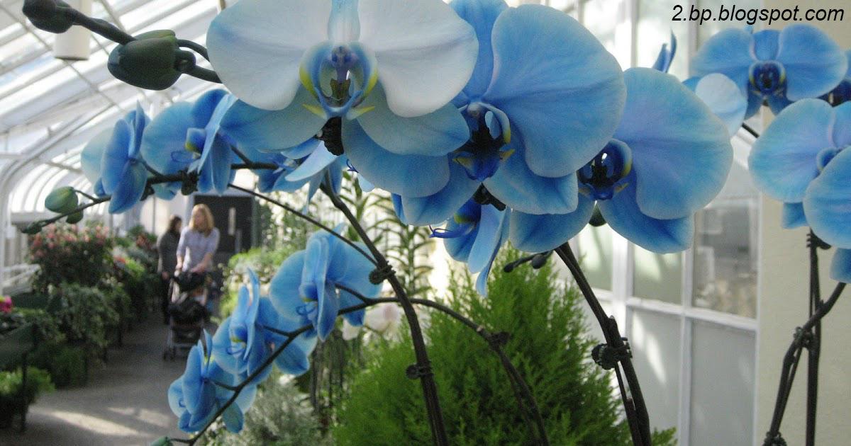 Вот что вам обязательно надо делать по вечерам, если в доме много орхидей