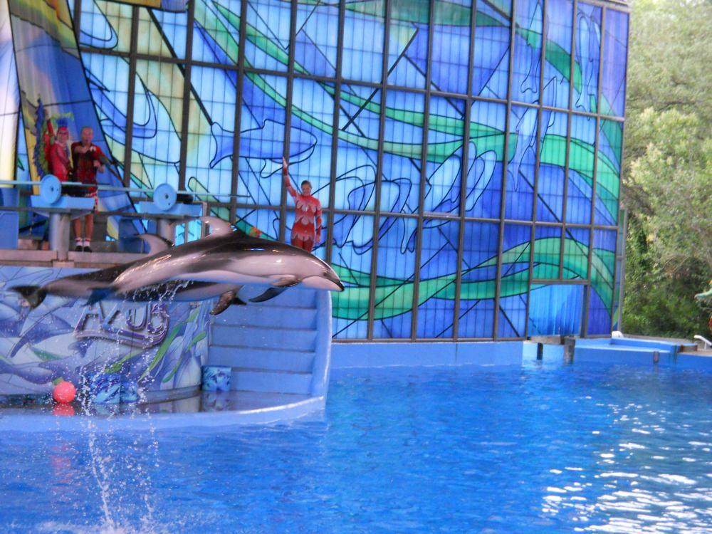 10 причин, почему все дельфинарии надо закрыть