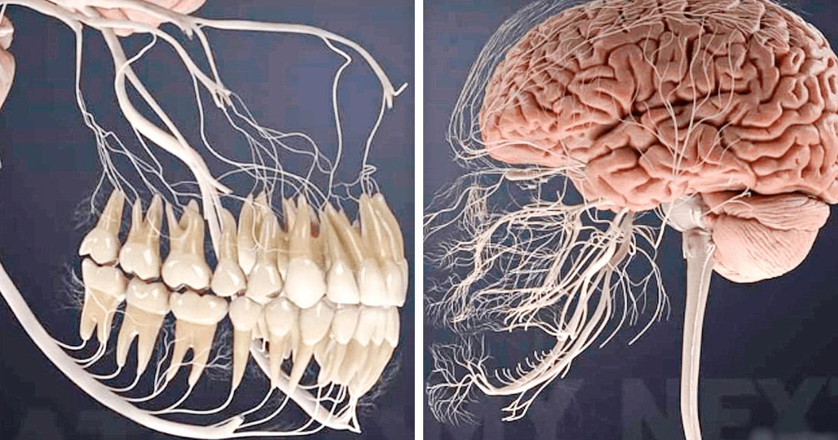 20 удивительных фактов о человеческом теле, которые расскажут больше, чем любой учебник