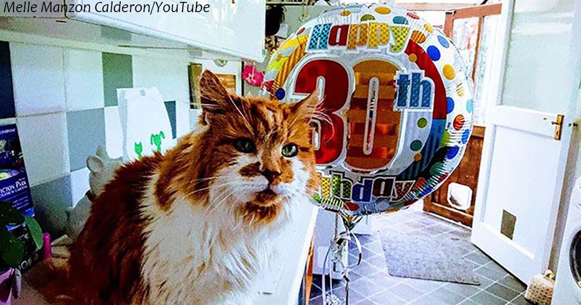 Эту кошку взяли в 1988 году. Сейчас ей 31!