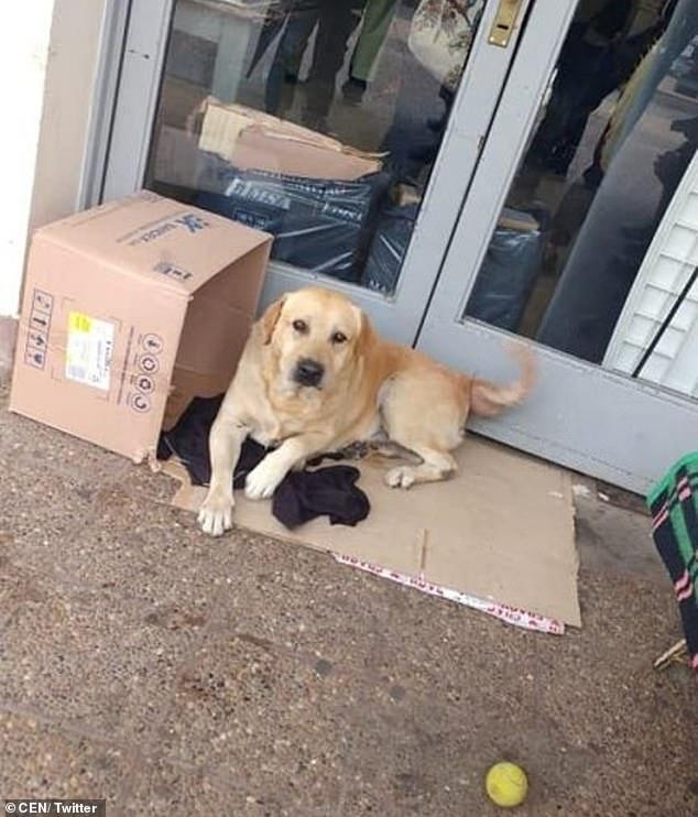 Преданный пес 2 неделю ждет хозяина у двери больницы - но тот уже не выйдет