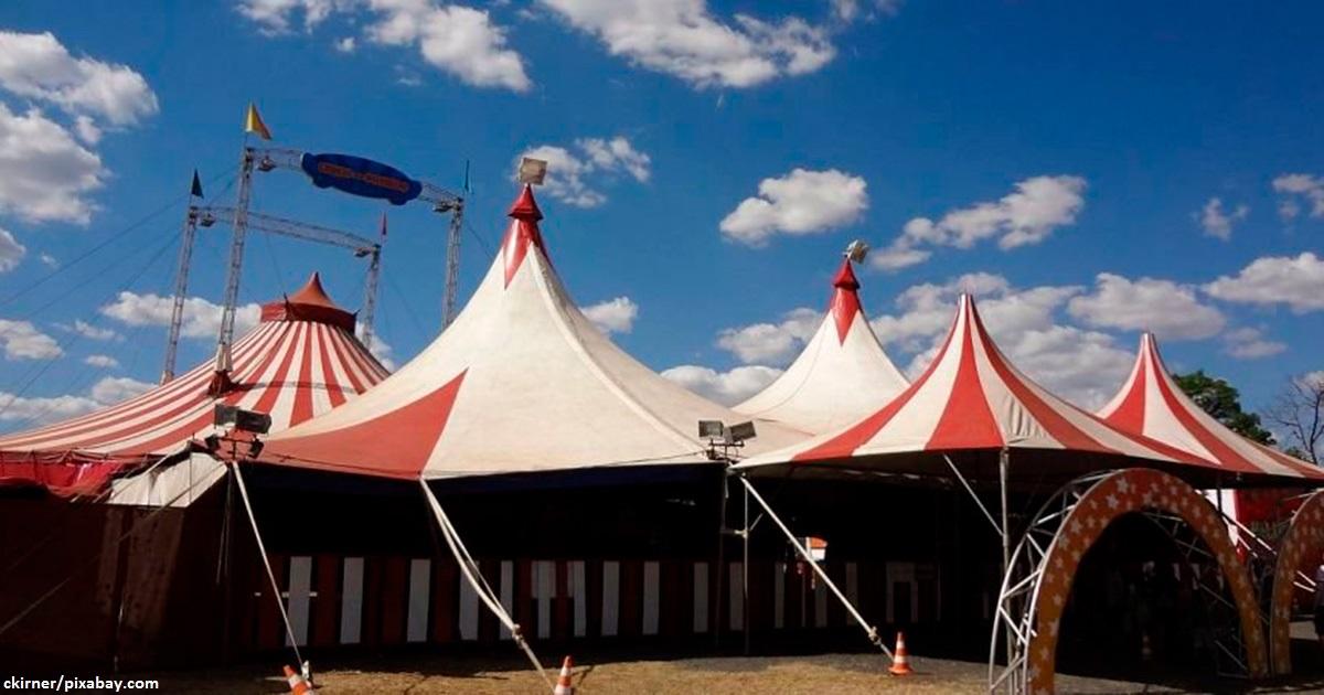 Теперь в Украине официально запрещены передвижные цирки с животными   так решил суд