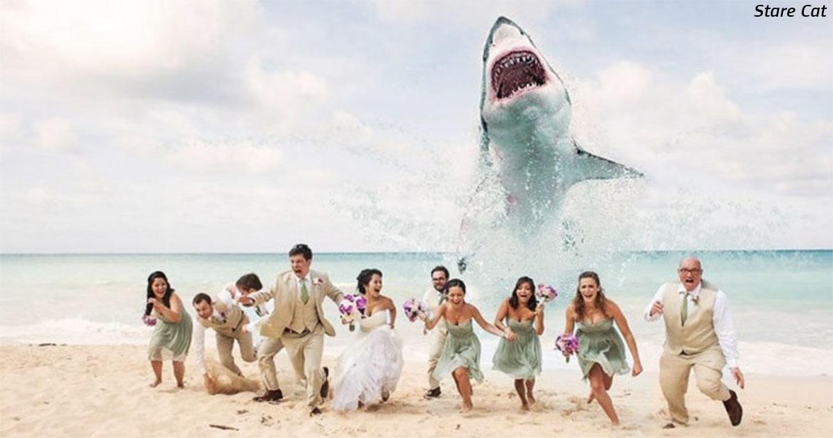 Безумные свадебные фото   новый тренд. Вот 8 примеров