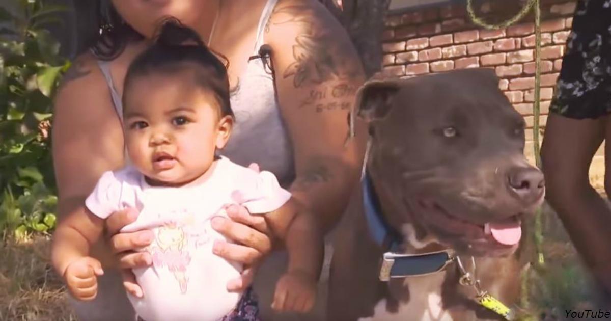 Их дом загорелся — и тут мать увидела, как пес тащит за подгузник их 7 месячного малыша