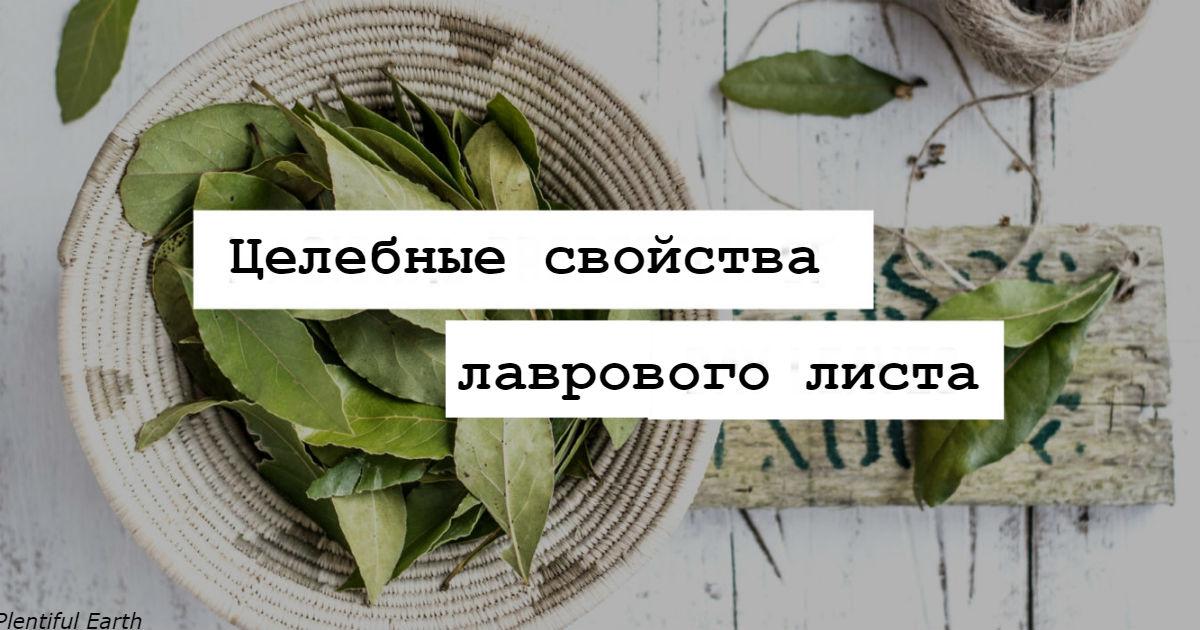 Подарок от Бога: листья, спасающие от давления, диабета и головной боли