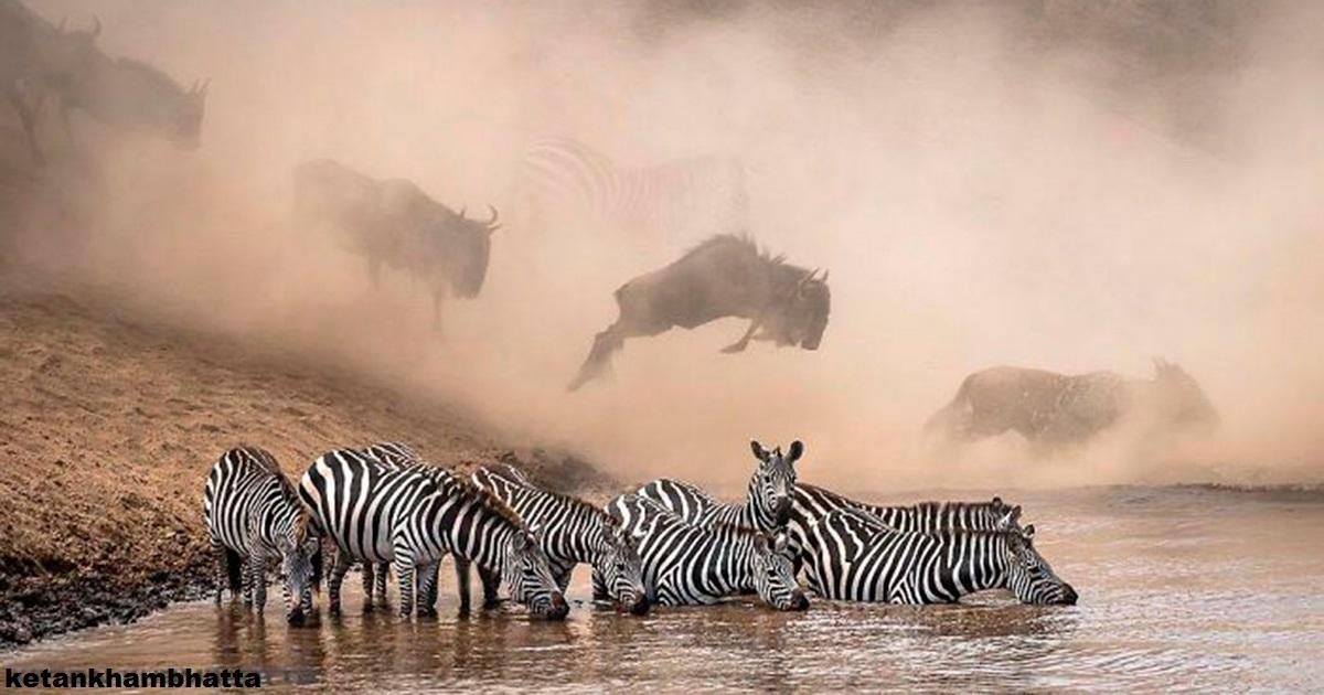30 самых потрясающих фото, которые были опубликованы в National Geographic