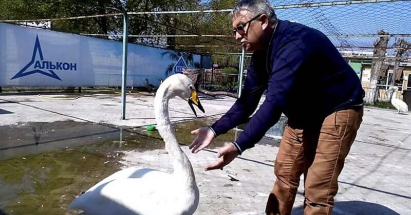 В зоопарке лебедь Жора жалуется директору. Кто же его обидел?