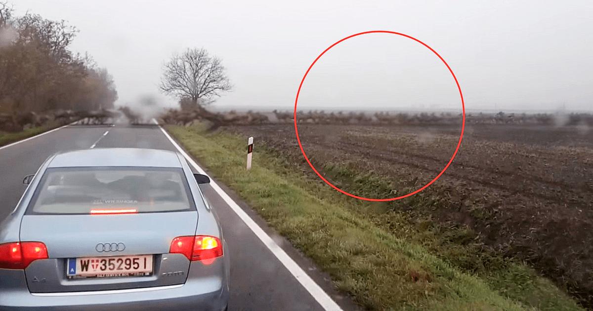 Оно появилось посреди безлюдного шоссе и этот день случайные зеваки запомнят надолго!