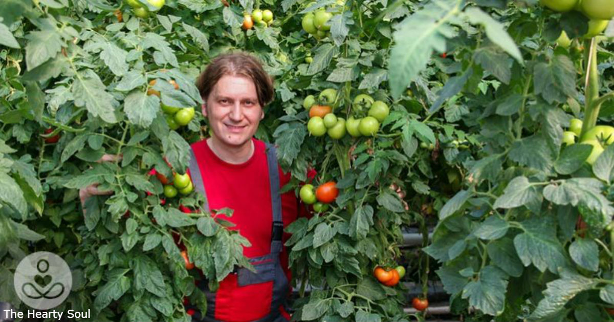 Правильный способ сажать помидоры   так, чтобы они были выше 2 метров