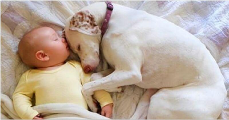 Собаку спасли и она боялась всех, кроме него. Этот 11 месячный малыш возродил в ней веру в людей