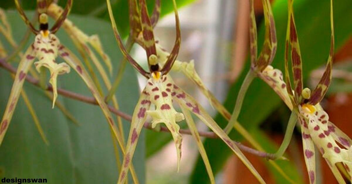 19 видов орхидей, которые выглядят не как цветы, а как что то абсолютно другое