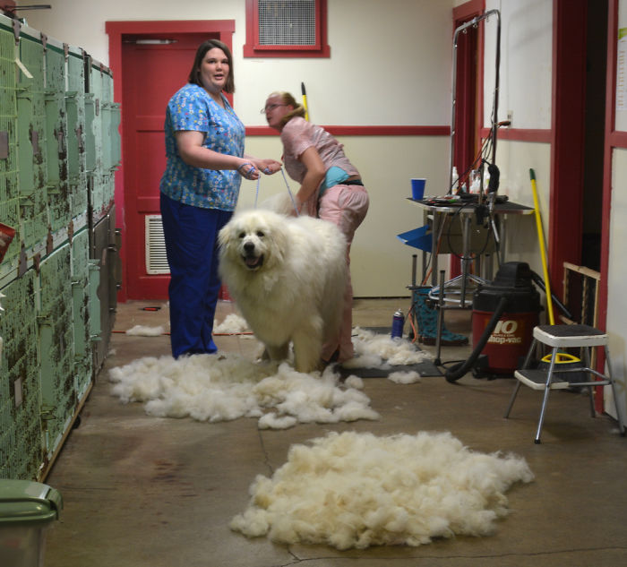 Один грумер популярно объяснил, почему он дороже парикмахера. Убедительно!