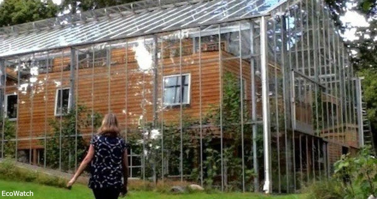 Пара из Швеции построила вокруг дома теплицу: экономит и на еде, и на тепле