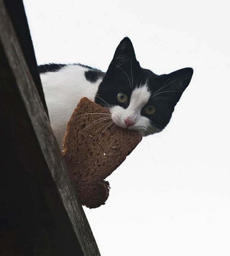 Голод не тётка! 15 попавшихся с поличным котов