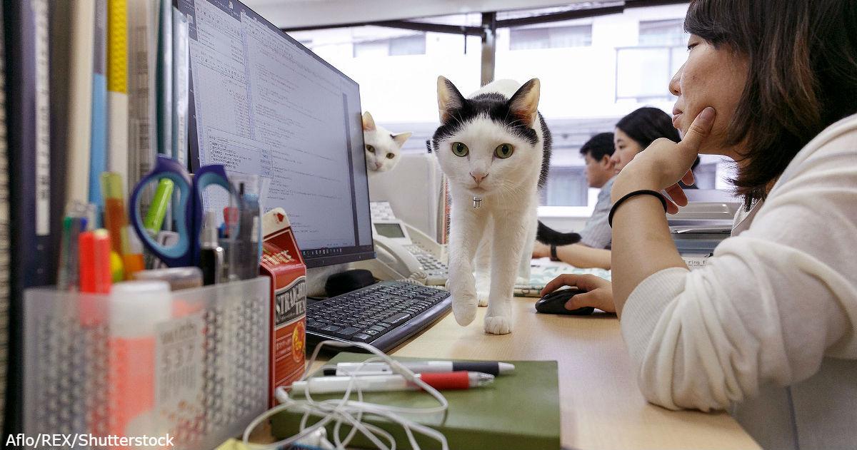 Японская компания взяла в офисы 9 брошенных кошек