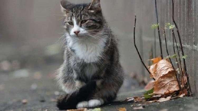 Кот две недели ждал хозяйку, которая попала в больницу, на одном и том же месте