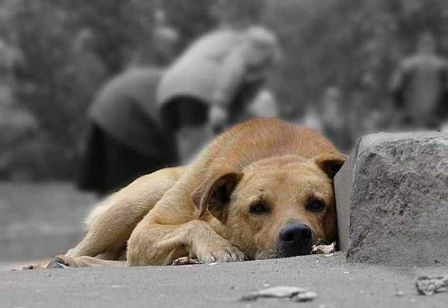 1 год тюрьмы или штраф 10 тысяч евро за выброшенное животное в Италии.