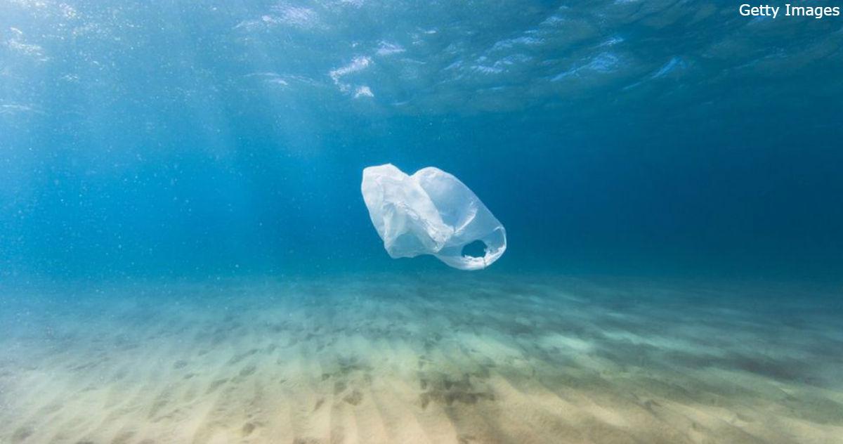 На Филиппинах на берег выбросило кита. В его желудке нашли 40 кг пластика