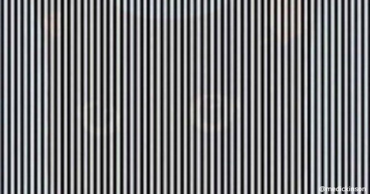 В этой иллюзии скрывается животное, но чтобы увидеть его, нужно покачать головой