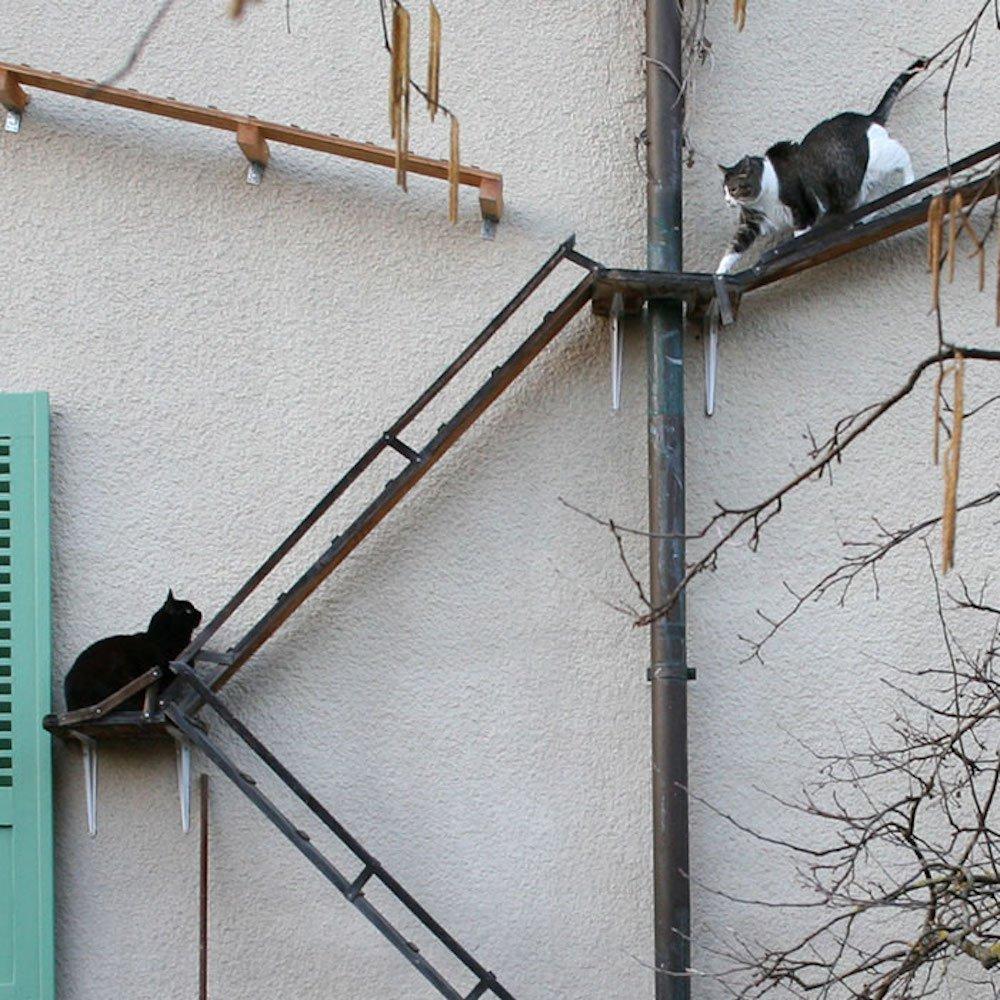 В Швейцарии для кошек делают лестницы, чтобы они могли гулять сами по себе