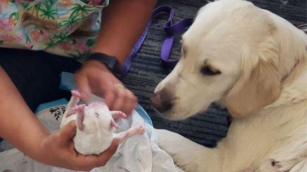 Собака начала рожать в аэропорту! Роды закончились неожиданностью.
