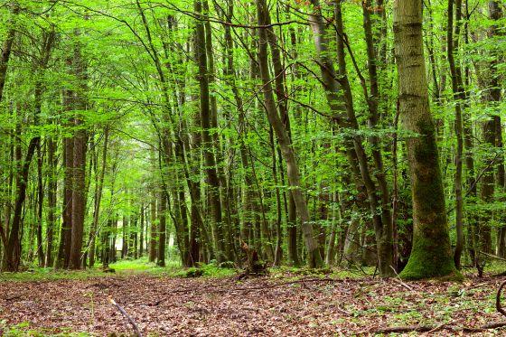 Значение слова  лесистый , примеры предложений