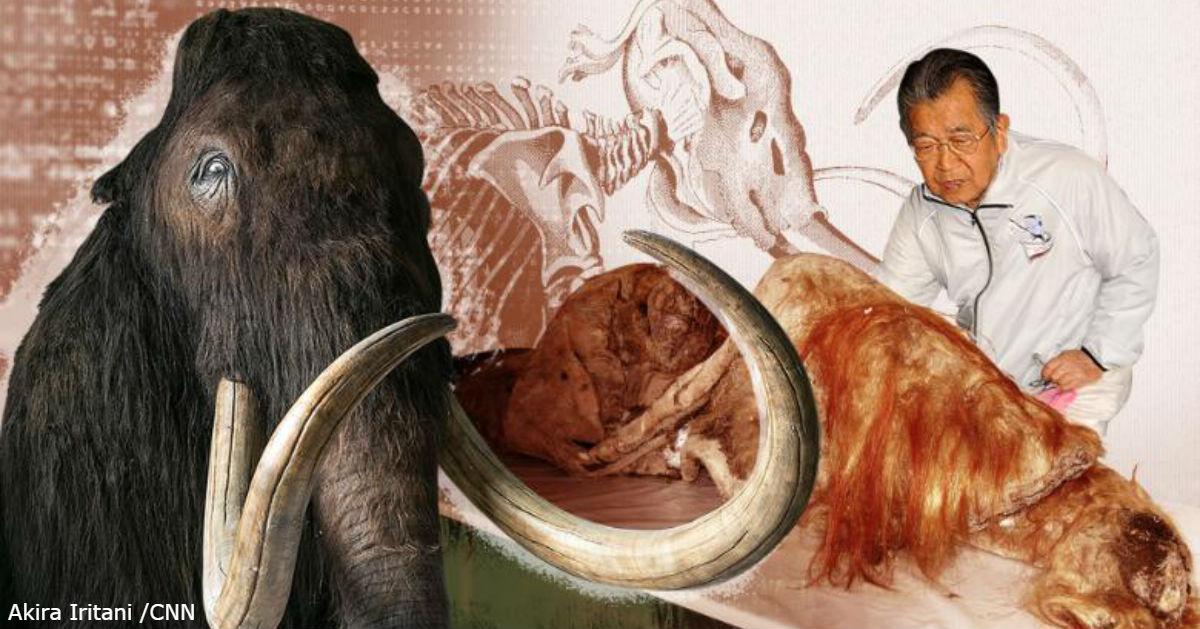 90 летний японский ученый все еще мечтает воскресить шерстистого мамонта