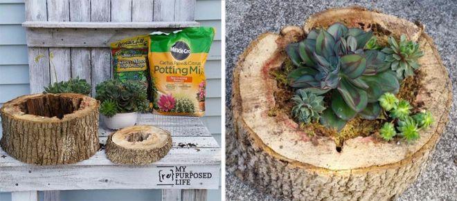 Как превратить пни и бревна в ″живые″ сады