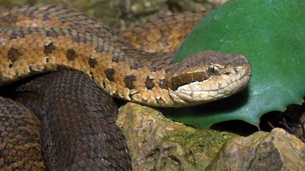 7 самых смертоносных змей в мире