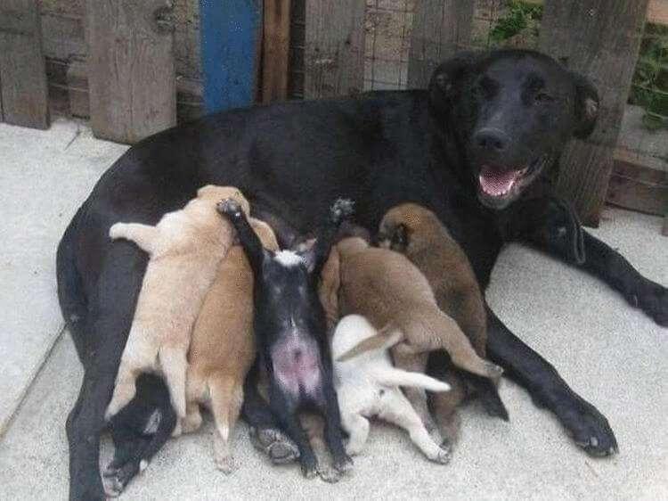 21 фото трогательных мам-героинь! Они так гордятся своими детками :)
