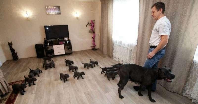 В России собака родила 19 щенков и попала в Книгу рекордов