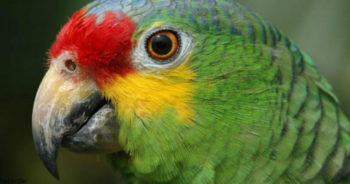В Бразилии арестовали попугая, который предупреждал наркоторговцев о полиции