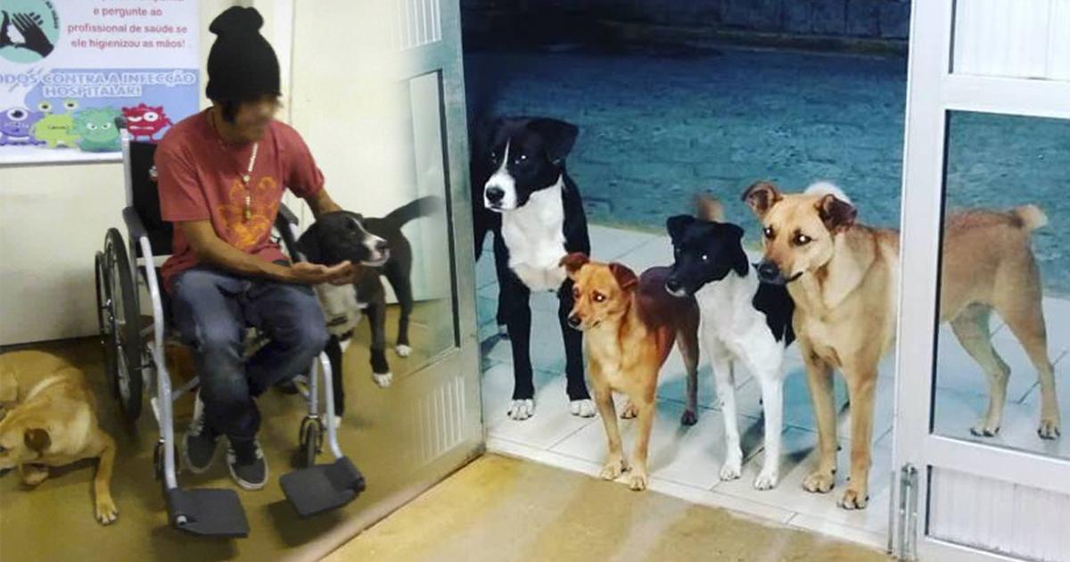 Бездомного положили в больницу   и все его 4 собаки терпеливо ждали его у двери