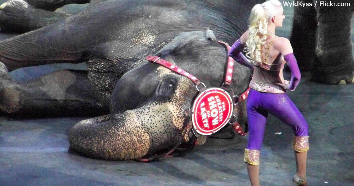 Словакия   еще одна европейская страна, где запретили цирк с животными