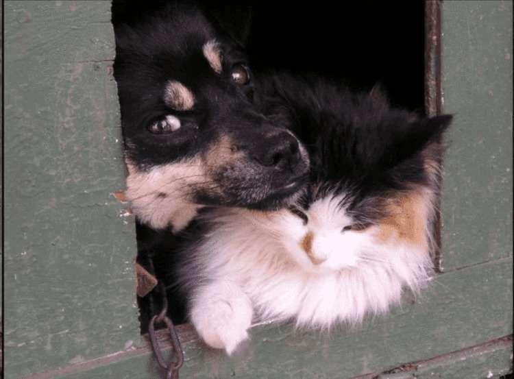 Кошка и собака, брошенные на даче, выживали как могли, пока не пришла помощь