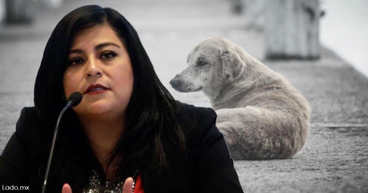 Депутат предлагает избавиться от бродячих собак и кошек: они ее «раздражают»