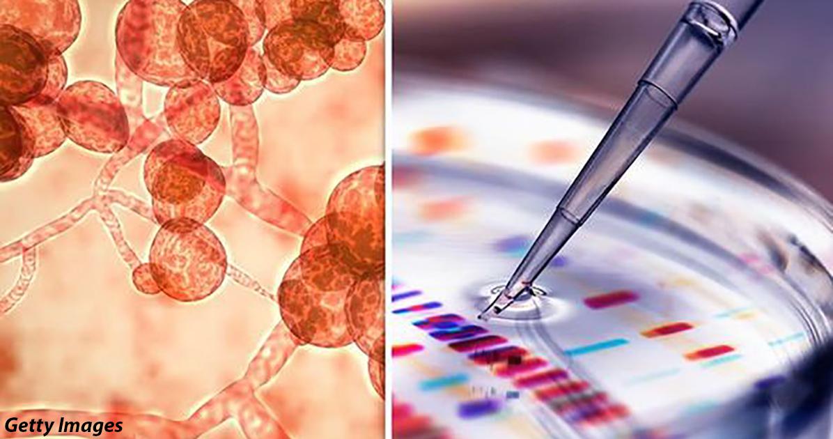 Устойчивый к лекарствам супергрибок распространяется по миру