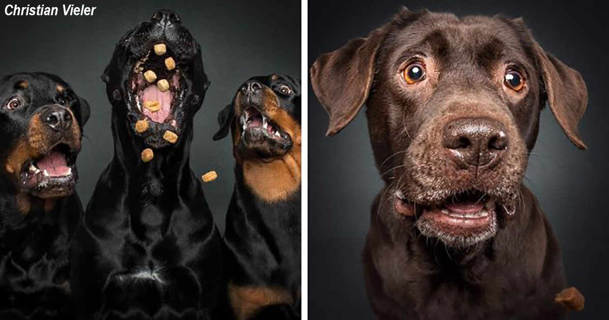 25 веселых фото собак, которые пытаются поймать угощения в воздухе