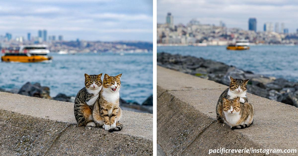 Я сфоткал двух обнимающихся бездомных кошек   клянусь, это не поставнока