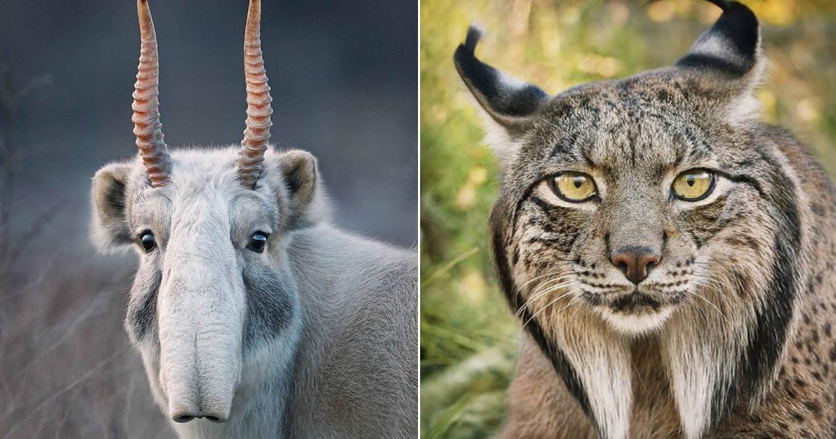 Я два года снимал редких вымирающих животных. Жаль, что вы их уже не увидите!